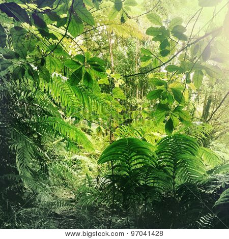 Lush green foliage in tropical jungle  poster