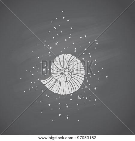 Seashells In Sketch Style On Chalkboard