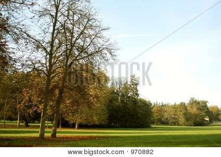 Landscape - Green Wood And Twin Trees