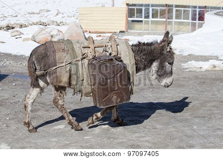 Donkey Is Carrying Fuel Cans In The Mountains On The Road Leh - Manali, Ladakh, India