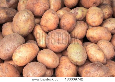 Pile of potato closeup image. Brown and yellow vegetables picture. Vegetarian shop display photo. Picture of raw potato cooking ingredient. Garnet vegetable. French fries or mashed potato ingredient