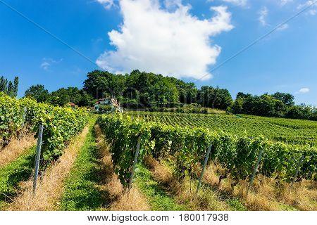 Chalet And Lavaux Vineyard Terraces Hiking Trail Lavaux Oron