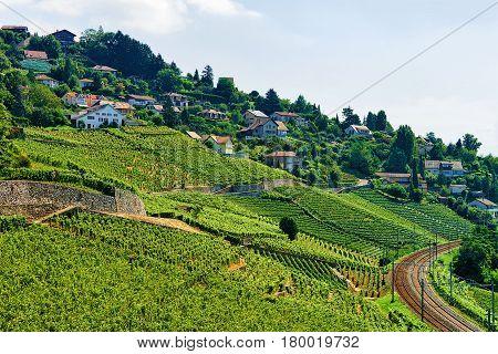 Railway Line On Lavaux Vineyard Terraces Switzerland