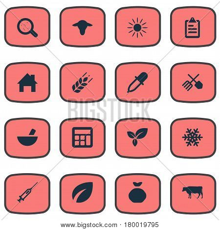 Vector Illustration Set Of Simple Agriculture Icons. Elements Horticulture Equipment, Sack, Plant And Other Synonyms Cattle, Sunlight And Flora.