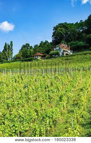 Chalet On Lavaux Vineyard Terraces Hiking Trail In Swiss