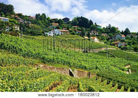 Railroad At Lavaux Vineyard Terraces In Switzerland