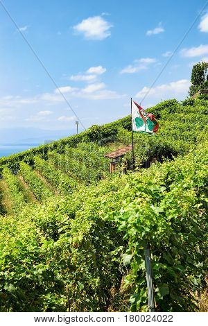 Shelter House With Flag On Vineyard Terraces Lavaux In Switzerland