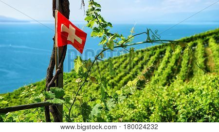 Swiss Flag At Vineyard Terraces Hiking Trail Lavaux Of Switzerland