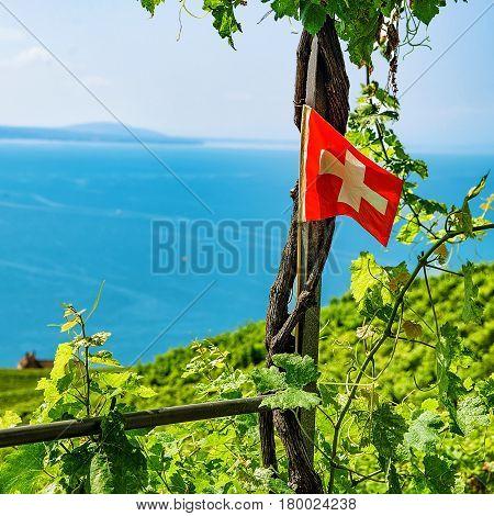 Swiss Flag On Vineyard Terraces Hiking Trail Lavaux In Switzerland