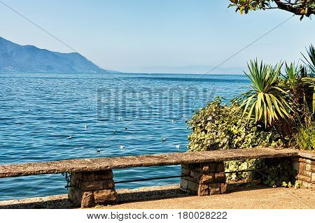 Bench And Plants Blooming At Embankment Of Geneva Lake Montreux