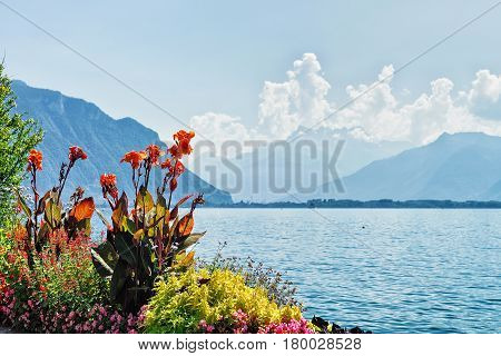 Flowers Blooming In Embankment Of Geneva Lake In Montreux