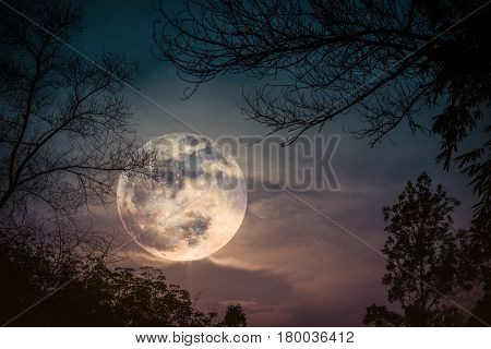 Silhouettes of dry trees against night sky with clouds and super moon over tranquil nature background. Landscape in the evening at national park. Beauty of nature. The moon were NOT furnished by NASA.