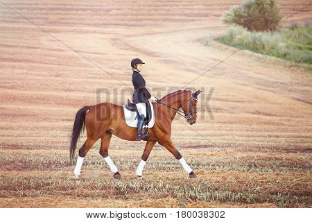 woman riding a horse. Girl in dark helmet, jeans and high boots on a brown horse in field