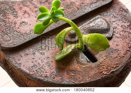 Environment conservation concept. Green plant and old lock.