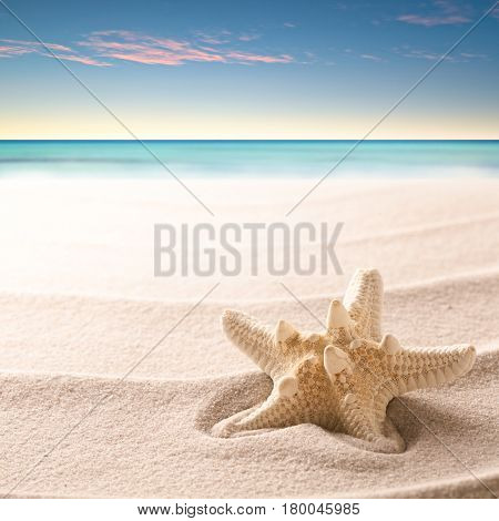 A tropical starfish laying in the beach sand. Sandy texture with sea star fish and copy space. Concept  for summer vacation or exotic holiday.