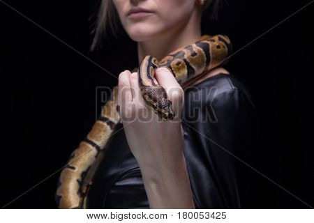 Woman in leather dress holding ball python on black background