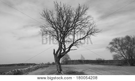 One lonely tree is standing isolted on a field with snow during the winter season.