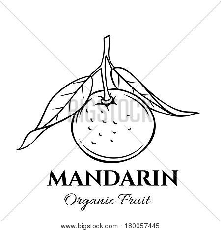 Hand drawn mandarin icon. Vector badge fruit in the old ink style for brochures, banner, restaurant menu and market
