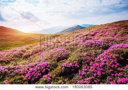 Gorgeous scene of the alpine valley in sunlight. Picturesque day. Location place Carpathian Ukraine, Europe. Wonderful image of wallpaper. Excellent outdoor vacation. Explore the world's beauty.