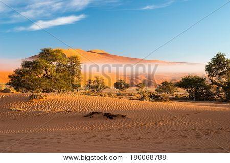 Sand Dunes In The Namib Desert At Dawn, Roadtrip In The Wonderful Namib Naukluft National Park, Trav