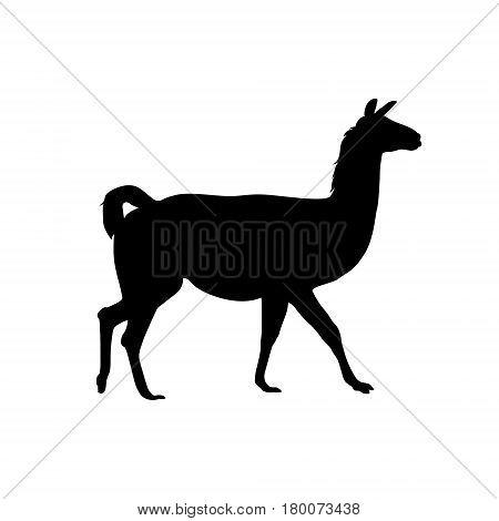 alpaca (vicuna llama) vector black flat silhouette
