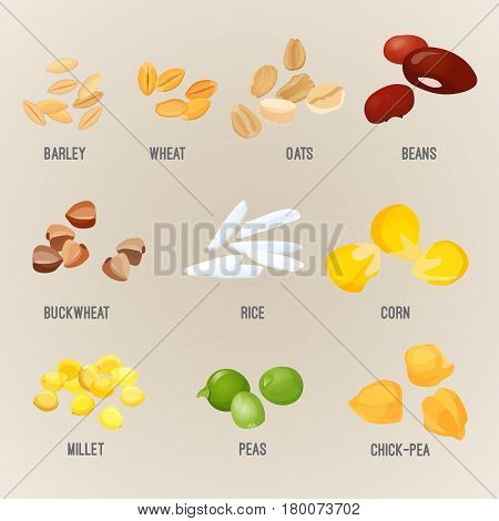 Cereal piles of various types with some big grains colorful vector. Illustration of organic barley, healthy wheat, oats with beans, buckwheat in rice, yellow corn and millet, type of pea chick-pea