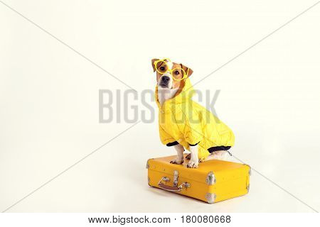 A fancy dog Jack-Rassel terrier is wearing yellow raincoat and glasses and sitting on a suitcase. The picture is taken at studio and has white background. Travel, tourism concept