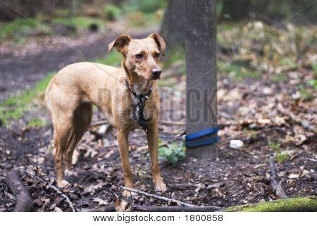 Begrenzte Hund