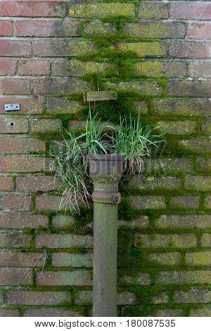 Broken drainpipe when nature takes over again