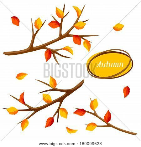 Autumn set with branches of tree and yellow leaves. Seasonal illustration.