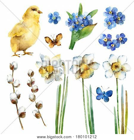 Spring holiday Easter set. Chicken forget-me-nots daffodils pussy-willow and butterflies. Watercolor illustration