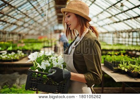 Portrait of smiling young woman wearing straw hat enjoying working in flower nursery glasshouse, holding box full of flower saplings and carrying it over