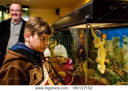 Uzhhorod Ukraine - March 26 2017: Visitors are considering a gecko during an exhibition of terrarium animals.