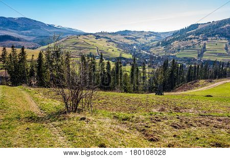 mountain rural area in springtime season. agricultural field on a hill near the spruce forest and village. beautiful and vivid landscape with snowy peaks in the distance.