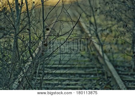 The old railway, which are overgrown with trees and bushes that can be seen on it have not ridden a locomotive, and it makes grim picture and epic.