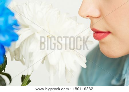 Close-up shot of young woman with red lipstick sniffing fresh white chrysanthemum against white background