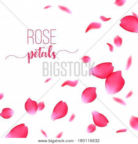 Rose red petals falling gently in the air on a white background, realistic vector illustration for romantic valentine card or wedding invitation, love concept