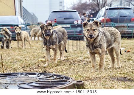 Pack of homeless puppies looking at camera