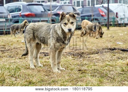 Nice homeless puppy standing on dry grass in early spring