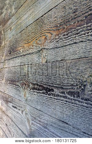 Gray background of pine boards of old wall