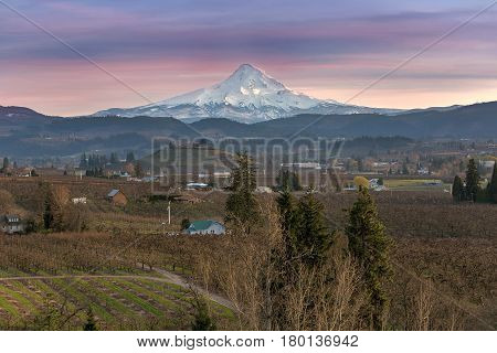 Mount Hood over Hood River Valley Fruit Orchard Farmland during Sunset