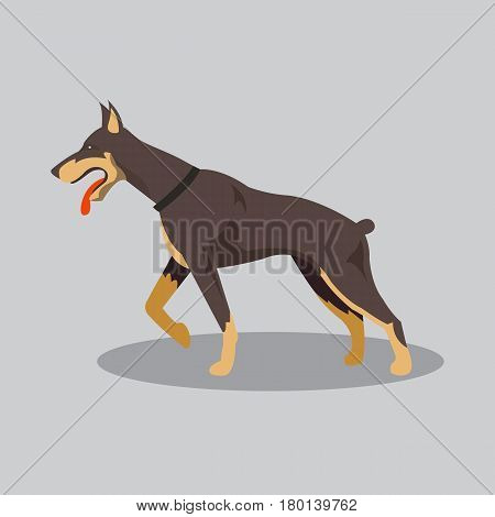 Dog doberman cartoon. Dog in flat style. Vector stock.