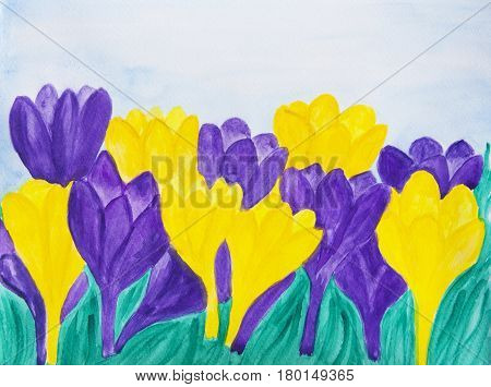 Illustration painting watercolor - few purple and yellow colour crocuses in grass and blue sky.