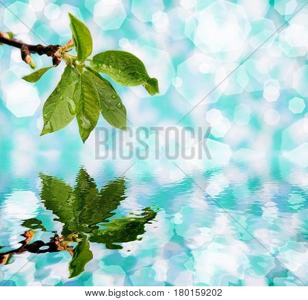 Green branch of reflection in clear water on a blue background.