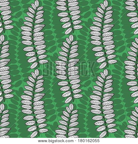 Seamless pattern with acacia leaves. Vector green nature background for packaging textile and fabric design