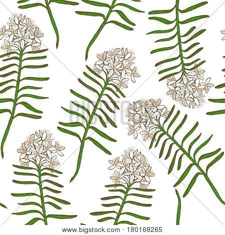 vector hand drawn colored background with wild rosemary