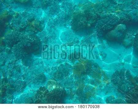 Sea animals and plants. Blue oceanic landscape underwater photo. Shallow waters seaweed and coral reef formation. Undersea scenery with corals and fishes. Exotic wild nature. Tropical sea lagoon image