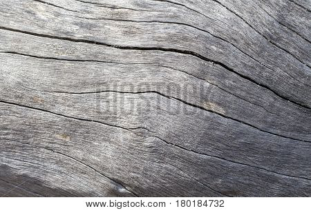 Distressed wooden texture closeup photo. Cold grey wood background. White old tree near the sea. Curves and cracks on rustic timber. Rough timber texture. Sea wood backdrop. Grey old tree surface