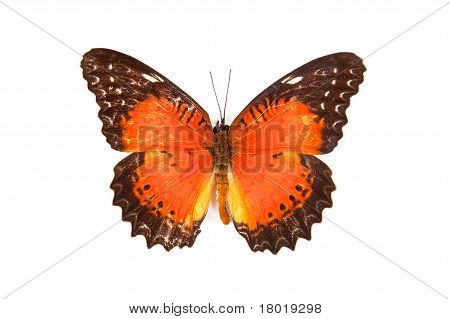 Black And Red Butterfly Cethosia Biblis Isolated On White Background