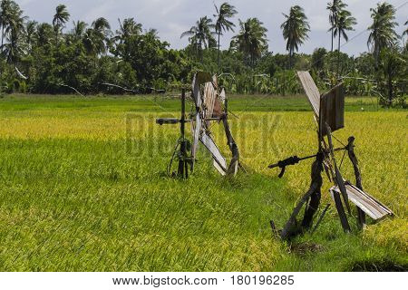 Rice fields with water supply machine. Coco palm trees. Tropical nature travel photo. Traditional rice growing in Asian country. Agriculture field. Green grass field image. Exotic island countryside